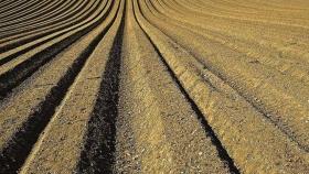 El uso de agua en la agricultura de EE. UU. Está disminuyendo para la mayoría de los cultivos y la producción ganadera