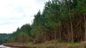 Implementación de tecnología LiDAR para la realización de inventarios forestales en empresa del norte argentino
