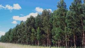 Destacan los beneficios de las cortinas forestales