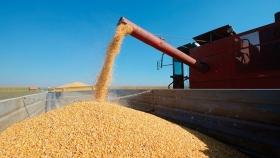 Escenario contradictorio en el mercado de granos
