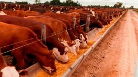 Proyecciones de consumo de maíz 2020/21 para uso animal