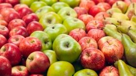 Crean programa de asistencia para producción de peras y manzanas