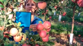 La alternativa digital que permite calcular rindes frutícolas con más precisión y rapidez
