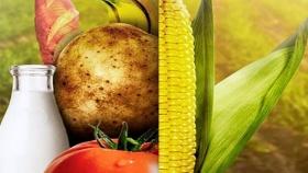 Organismos genéticamente modificados: el futuro de la industria alimentaria