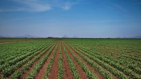 México aplicará medidas espejo si EU limita agroproductos