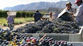 Mendoza busca desocupados locales para trabajar en los viñedos