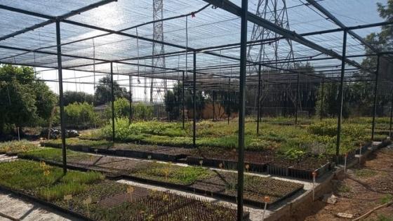 El Centro Agropecuario Provincial entrega 40.000 árboles y arbustos a los municipios de Córdoba
