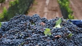 Crean una mesa vitivinícola para diferenciarse de la Coviar