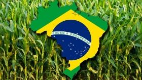 Brasil: caída de cosecha y menos exportaciones de maíz