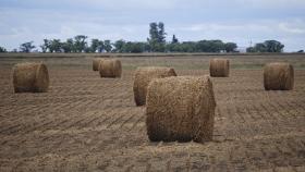 La alfalfa pide pista en el Chaco