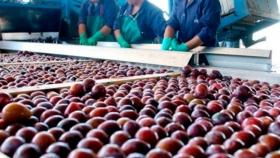 Exportación de fruta fresca a Estados Unidos y México con certificación en origen