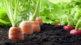 Lanzamiento del programa para impulsar la agricultura orgánica local