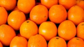Naranja: la exportación de jugo es la más alta en 11 años