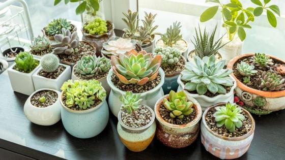 Talleres específicos de jardinería, huerta y paisajismo