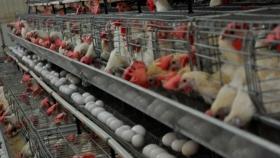 ¿Podrían faltar huevos en las góndolas? Sin respuestas, crece la posibilidad del desabastecimiento