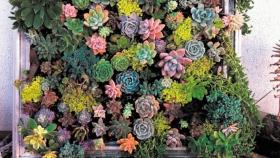 Paso a paso, cómo hacer un cuadro verde, el pequeño jardín vertical