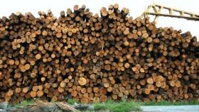 Entidades de la industria forestal se agrupan en una nueva institución