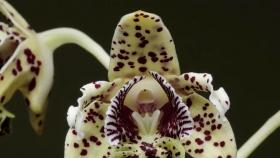 Nueva Guinea atesora la flora isleña más rica del mundo
