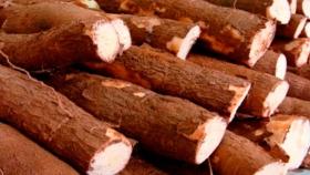 Venta récord: productores de Misiones colocaron batata y mandioca de Puerto Piray en los comedores de Buenos Aires