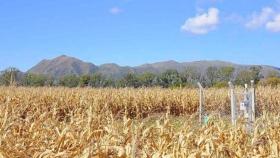 Monte Buey y Cosquín certificaron como Municipio Verde