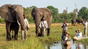 Caminando por la sabana africana
