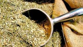 Aumentaron la producción y el consumo de yerba mate en Argentina