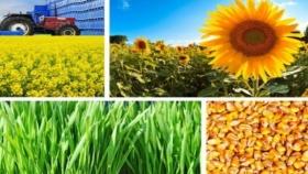 El deber de exportar: cómo generar más divisas de la mano de la agroindustria