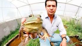 Cultivo de ranas