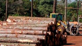 Solicitan aunar fuerzas por una ley foresto-industrial