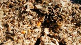 Recomendaciones del INTA para elaborar silajes de maíz más duraderos
