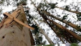 El sector forestal y la celulosa, un valor para impulsar el mundo rural