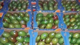 Mangos y frutos tropicales de Naineck rumbo a mercados nacionales