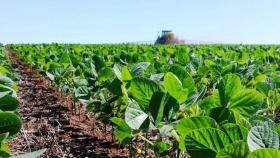 El sube y baja de la soja: por qué se desplomó más de USD 56 en lo que va del mes y qué consecuencias puede traer para el país
