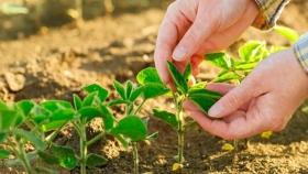 Proyecto sobre fertilizantes: aumentar entre 8 y 18 MTn la producción nacional
