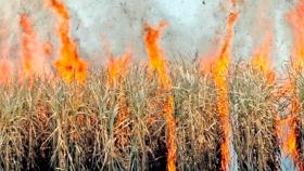 Tucumán: Las malas condiciones ambientales trajeron graves consecuencias a la caña de azúcar