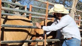 Continúan programas de apoyo al sector ganadero