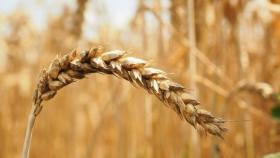 La Mesa Agroindustrial coincidió en que debe primar el diálogo hacia dentro de la cadena para resolver las diferencias con el Gobierno