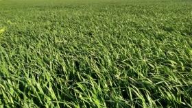 Buen ritmo: crece la siembra de pasturas en 2021