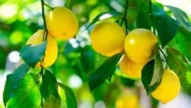 A pesar del mal tiempo, estiman una buena campaña para el citrus