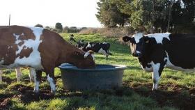 Carlos Tejedor compra agua para salvar vacas