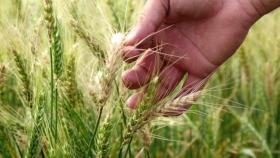 Triguero: herramienta potenciada para optimizar la fertilización