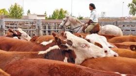 Establecimientos ganaderos en peligro de extinción