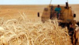 Brasil estima una producción 6,8 mill de tn de trigo