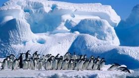 Argentina y Chile presentarán una propuesta para proteger la biodiversidad de la Antártida