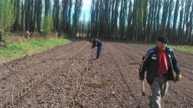 Plantan 2 mil estacas de álamos en vivero de Sarmiento