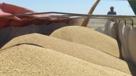 ¿A dónde van los dólares del agro? La mitad, a financiar otras industrias deficitarias