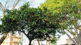 Conociendo los frutales de Buenos Aires