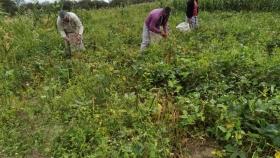 Definen las motivaciones que impulsan a los agricultores a adoptar prácticas sostenibles