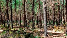 Ley 13273, Riqueza Forestal