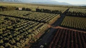La Rioja tendrá la primera planta de pellets olivícolas del país